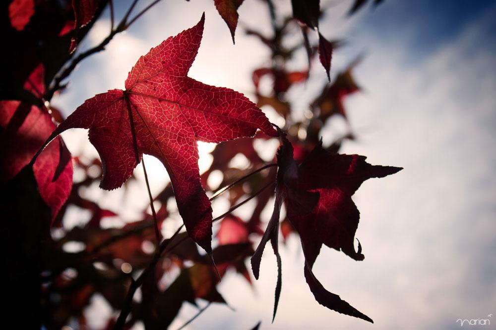 reportaje fotográfico otoño